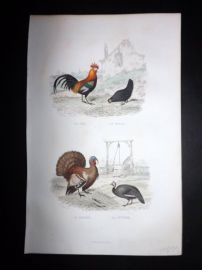 Buffon 1849 Hand Col Bird Print. Cockerel, Turkey, Guineafowl. Poultry